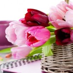 Flowers Gift Combos